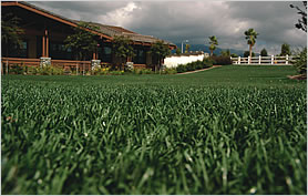 Residential Landscaping Grass